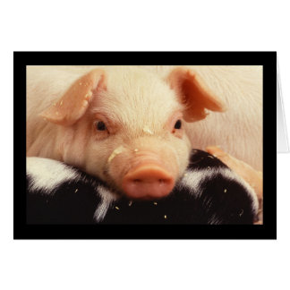 Piglet Pig Adorable Face Snout Stationery Note Card