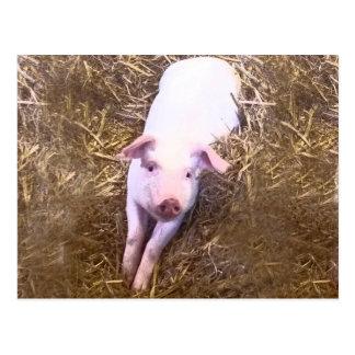 Piglet Postcard