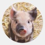 Piglet Round Sticker