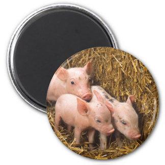 Piglets 2 Inch Round Magnet