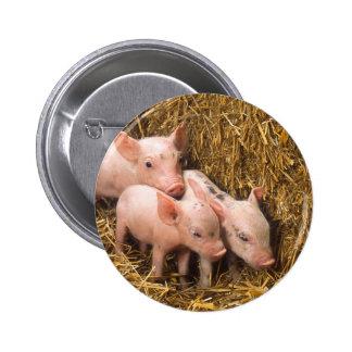 Piglets Pinback Button