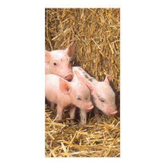 Piglets Card