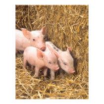 Piglets Flyer
