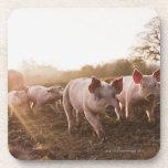 Piglets in Barnyard Drink Coaster