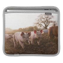Piglets in Barnyard iPad Sleeve