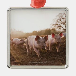 Piglets in Barnyard Metal Ornament