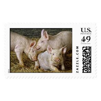 Piglets Postage Stamps