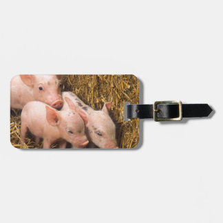 Piglets Tag For Luggage