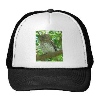 Pigmeo-búho cubano gorros