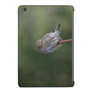 Pigmeo-búho septentrional fundas de iPad mini