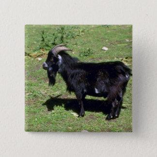 Pigmy Goat Pinback Button