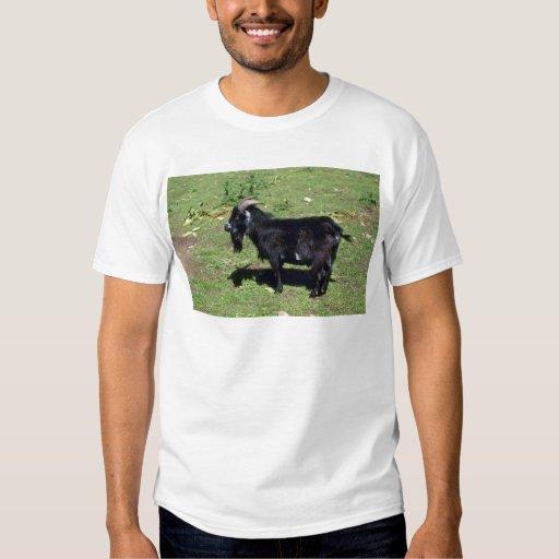 Pigmy Goat Tees