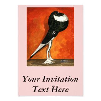 Pigmy Pouter Black Pied Card