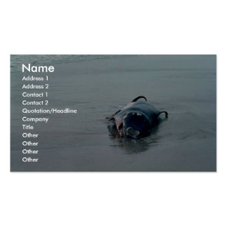 Pigmy Sperm Whale Beached Business Card