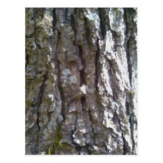 Pignut Hickory Tree Bark Postcard