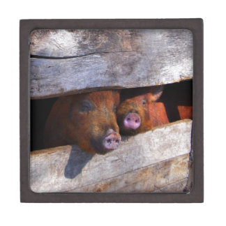 PigPen Pair Peeking Piggies Keepsake Box