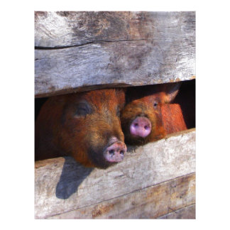 PigPen Pair Peeking Piggies Letterhead