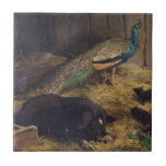 Pigs and Peacock by Charles Burton Barber in 1878 Small Square Tile