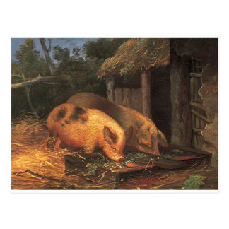Pigs at a Trough by George Morland Postcard