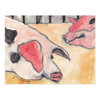 Pigs at the County Fair Postcards