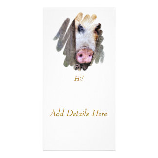 PIGS CARD