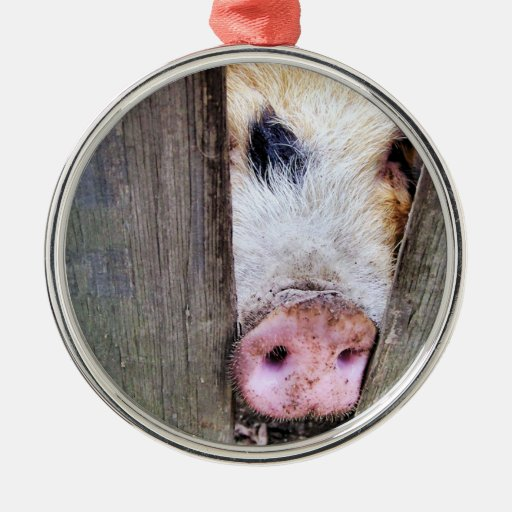 PIGS CHRISTMAS ORNAMENT