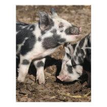 Pigs Flyer