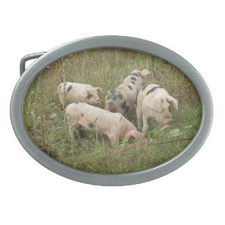 Pigs in a Field Belt Buckle