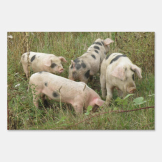 Pigs in a Field Decorative Yard Sign