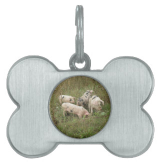 Pigs in a Field Pet Tag