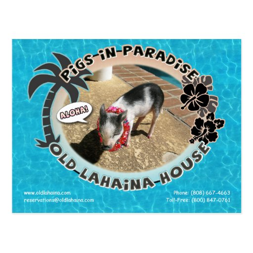 Pigs in Paradise Postcard