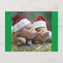 Pigs In Santa Hat Holiday Postcard