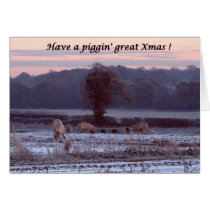 Pigs in snow Christmas card