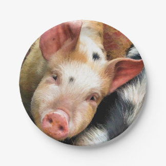 PIGS PAPER PLATE