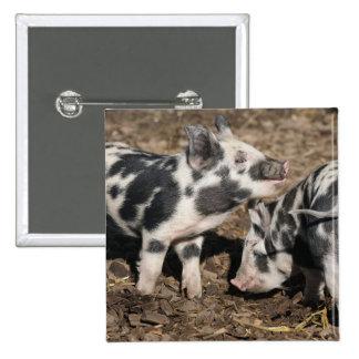 Pigs Pinback Button