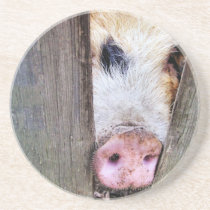 PIGS SANDSTONE COASTER