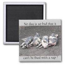 Pigs sleeping magnet