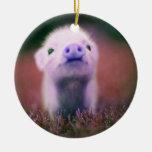 Pigsy púrpura adorno de navidad