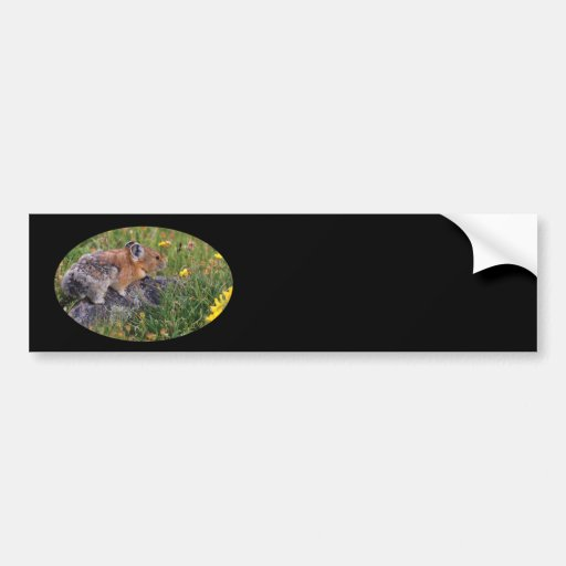 pika bumper stickers
