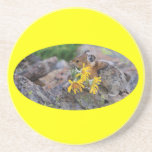 pika carrying wildflowers coaster