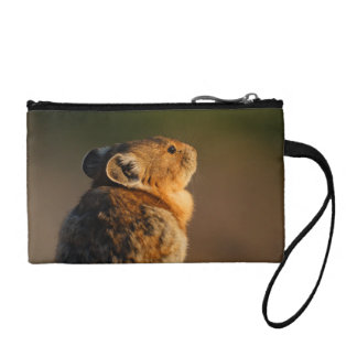 Pika in sunset light coin purse