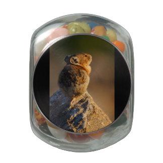 Pika in sunset light glass jar