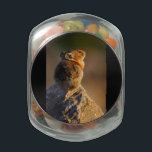 """Pika in sunset light jelly belly candy jar<br><div class=""""desc"""">Pika in sunset light... Using amazing, unique, and high-quality images of wildlife and nature, WorldDesign is dedicated to creating fun and beautiful products for people to enjoy, share, and promote as gifts. We are a Zazzle Elite ProDesigner and own the copyright to all the images presented and ALL of our...</div>"""
