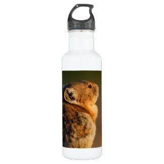 Pika in sunset light 24oz water bottle
