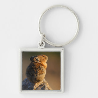 Pika in sunset light Silver-Colored square keychain