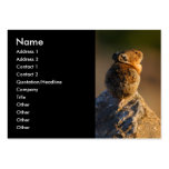 pika large business cards (Pack of 100)