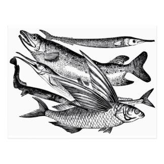 Pike Family - Fish Postcard