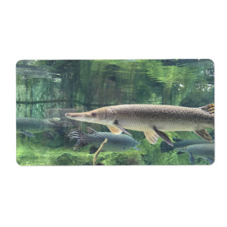 Pike Fish Label
