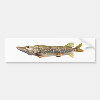 Pike Muski fishing Car Bumper Sticker