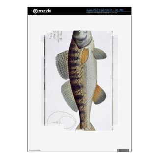 Pike-Perch (Perca lucioperca) plate LI from 'Ichth iPad 3 Skins